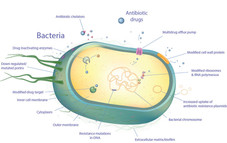 Bacterial cell for wix.jpg