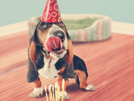 Dog-friendly cake? PDSA has you covered as Great British Bake Off returns!