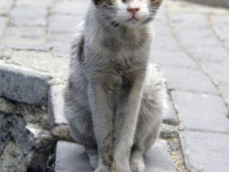 What Should I Do If I Find A Stray Cat? - Advice for cat lovers on World Cat Day, February 17th