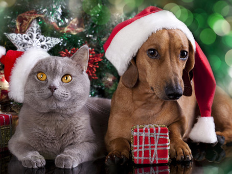 Festive treat warning for pet owners