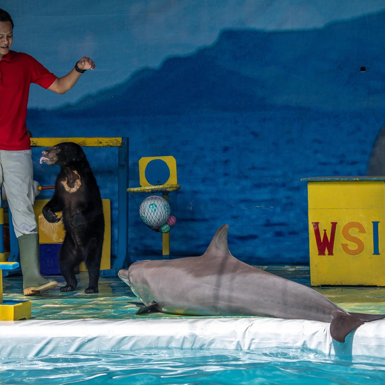 Sun bear and dolphin_WSI Bogor