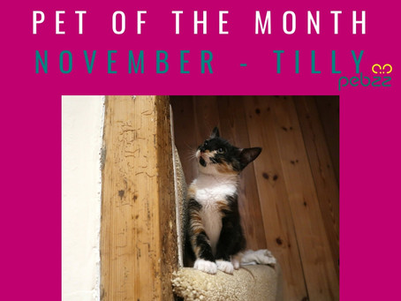 Pet of the Month - November 2018
