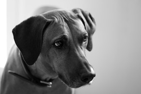 3 Easy Ways To Help If Your Dog Has A Noise Phobia