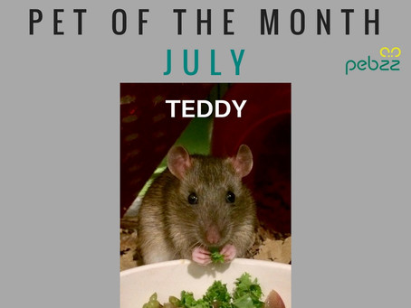 Pet of the Month - July 2018