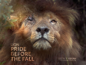 LION: PRIDE BEFORE A FALL