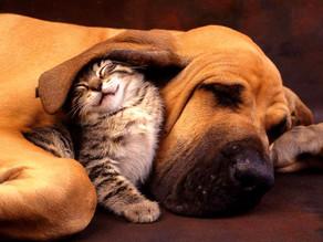 Help Your Pet Makes Friends.....