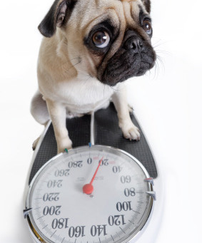 New Year Resolutions For You AND Your Pet - with the Ferplast Optima