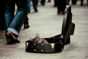 Proof That Cats Love Music Too!