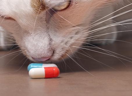 Keeping Cats Safe: Paracetamol