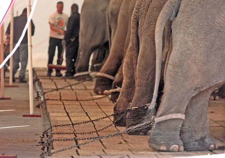 Relief For Young Elephants As Historic International Trade Ban Is Finally Passed