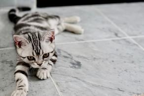 Keeping Cats Safe: Permethrin