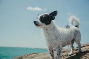 Top Tips On Keeping Your Canine Cool In The Heat