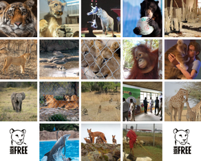 IGNORE POLITICS – at least it's been a good year for animal conservation!