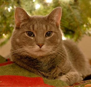 Christmas Safety For Your Cat
