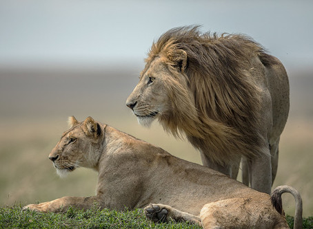 BRITISH AIRWAYS HOLIDAYS LAUNCHES PARTNERSHIP WITH CHARITY BORN FREE