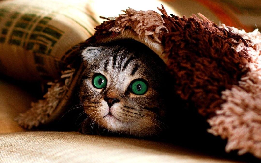 cat-2806957_1280-1080x675