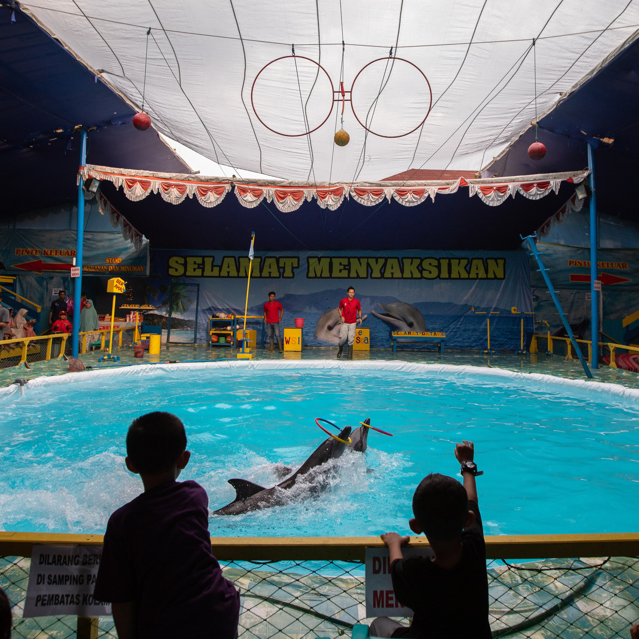 Children watching dolphins with hoops_WS