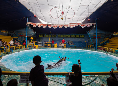 Call For The End Of Indonesian Travelling Dolphin Shows