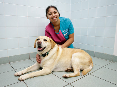 Dogs lose the weight of a Beagle to claim 'Biggest Loser' crown