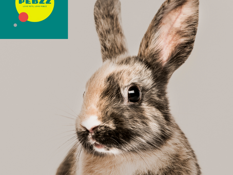 Thousands of Rabbits Are On 'Permanent Lockdown'