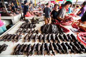 "GLOBAL INITIATIVE OUTLINES A ""ONE HEALTH"" APPROACH TO REFORMING WILDLIFE TRADE LAWS"