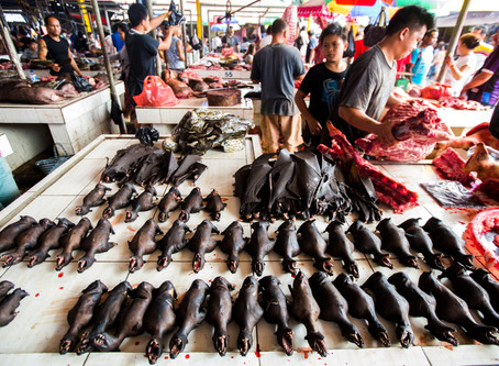"""GLOBAL INITIATIVE OUTLINES A """"ONE HEALTH"""" APPROACH TO REFORMING WILDLIFE TRADE LAWS"""