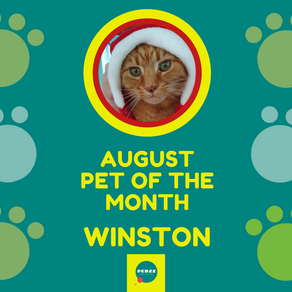 Meet Our Pet Of The Month For August