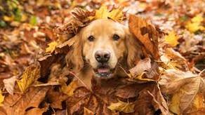 PDSA - Keeping Pets Safe This Autumn