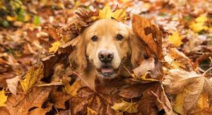 PDSA - Keeping Pets Safe This Autumn