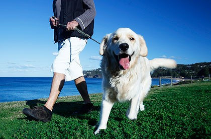 Just How Far Does A Dog Owner Walk Each Year?