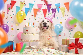 Pampered Pooches: Brits spend £125M annually celebrating dogs' birthdays