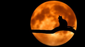 Keeping Cats Safe Campaign - How to help your kitty through Halloween and Fireworks