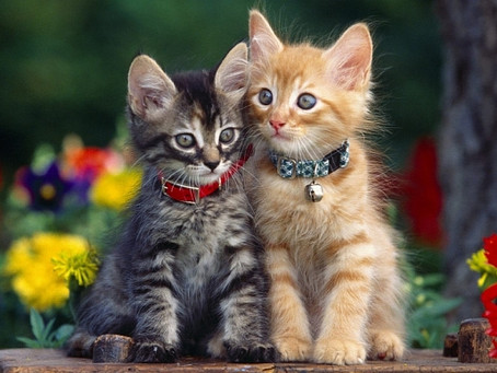 Keeping Cats Safe - Collar Injuries
