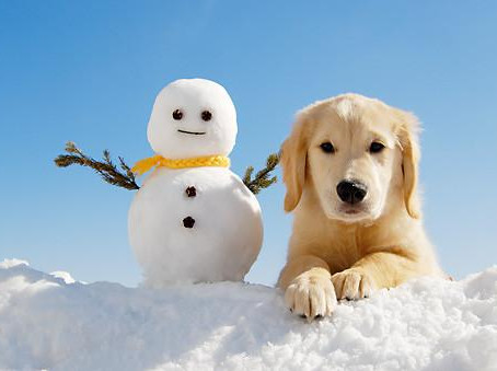 PDSA Keeping Pets Safe and Healthy Over Winter