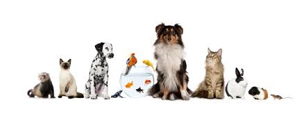 Animal Welfare Act - We discuss the five animal welfare needs and what they mean for you
