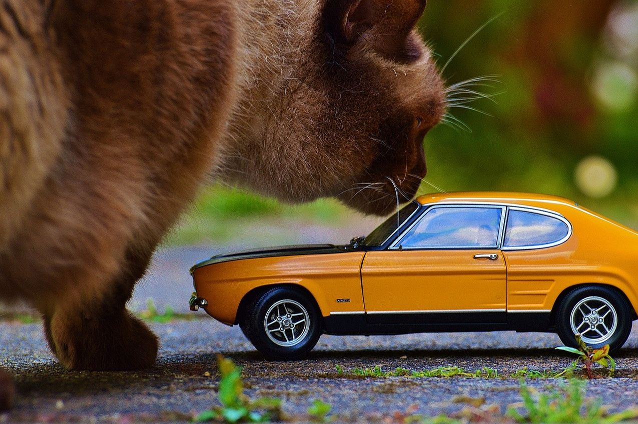 cat-with-mini-car