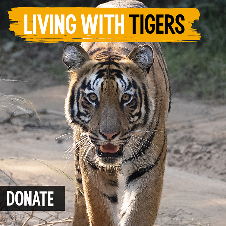 LIVING WITH TIGERS SQ DONATE