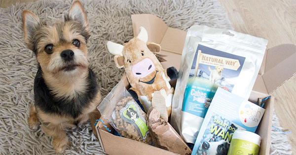 which-dog-subscription-box-