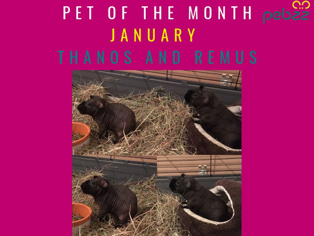Pet of the Month - January 2019