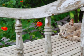 Keeping Cats Safe Campaign - Cat Friendly Gardening