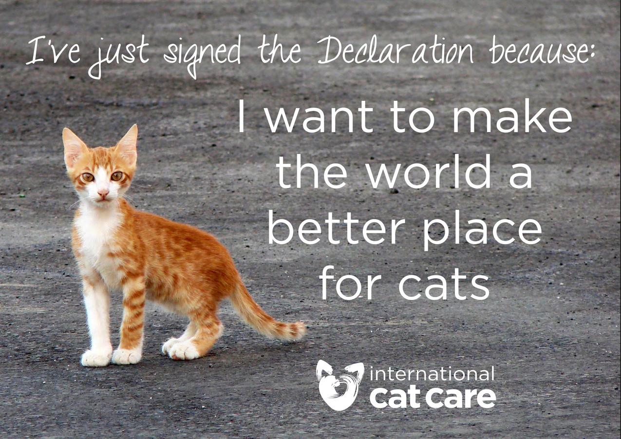 International-Cat-Care-International-Declaration-of-Responsibilities-to-Cats-The-Friendly-Pet-Nurse