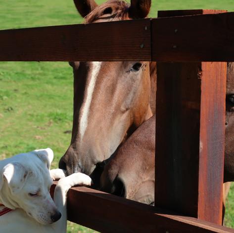 Shropshire Horses