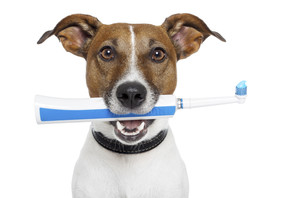 Brushing Up On Pets' Dental Care