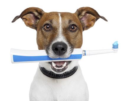 Brushing Up On Pets' Dental Care