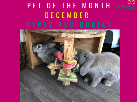 Pet of the Month - December 2018