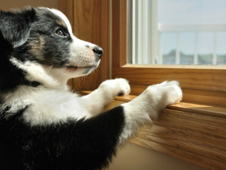 How do you keep your pets entertained in your absence?