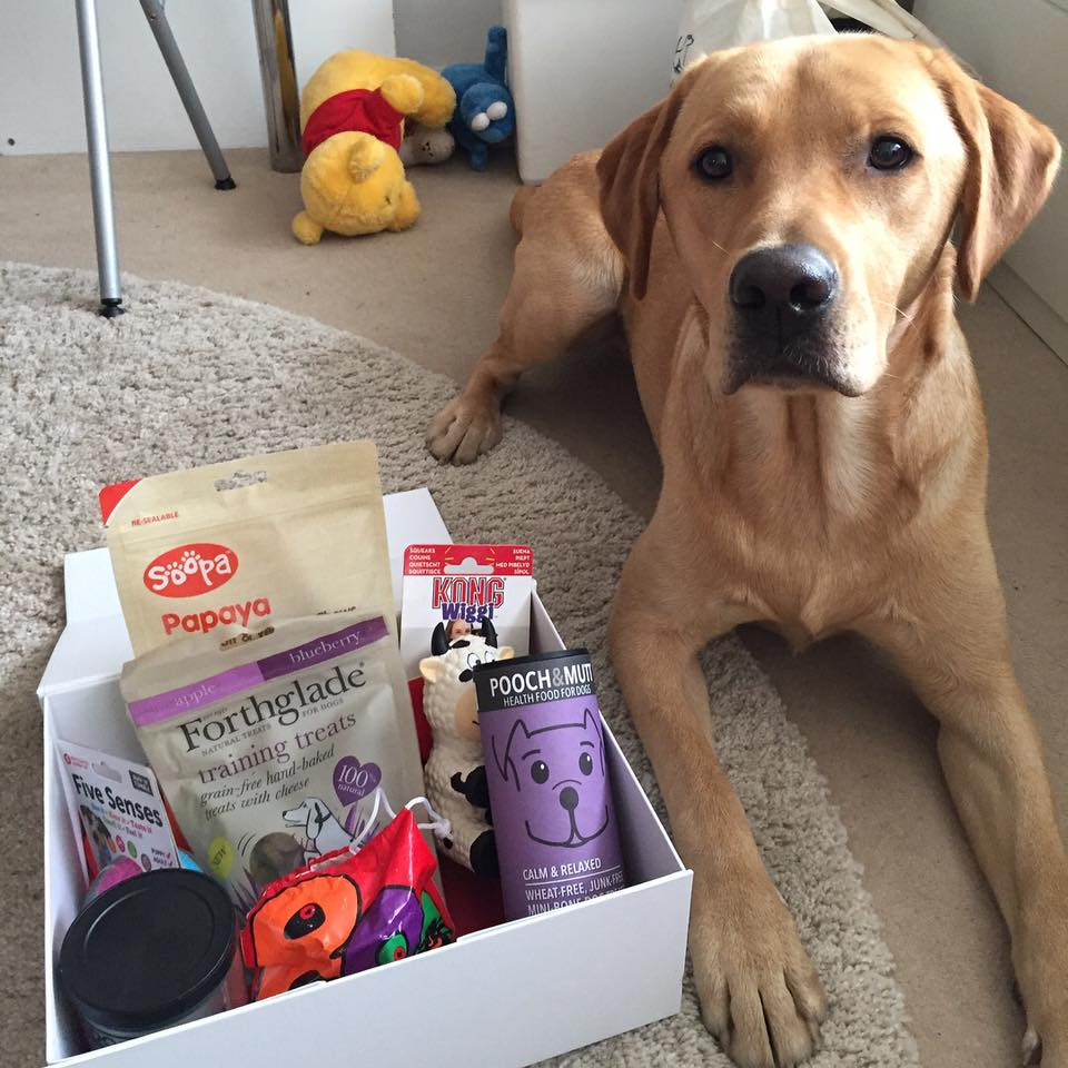 subscription-box-dogs