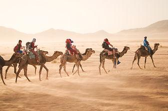 Camel%20Tour_edited.jpg