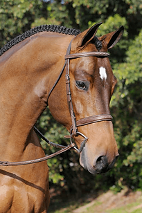 Tribute-Bridle-w-Raised-Fancy-Laced-Rein