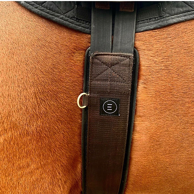 EquiFit Essential Girth